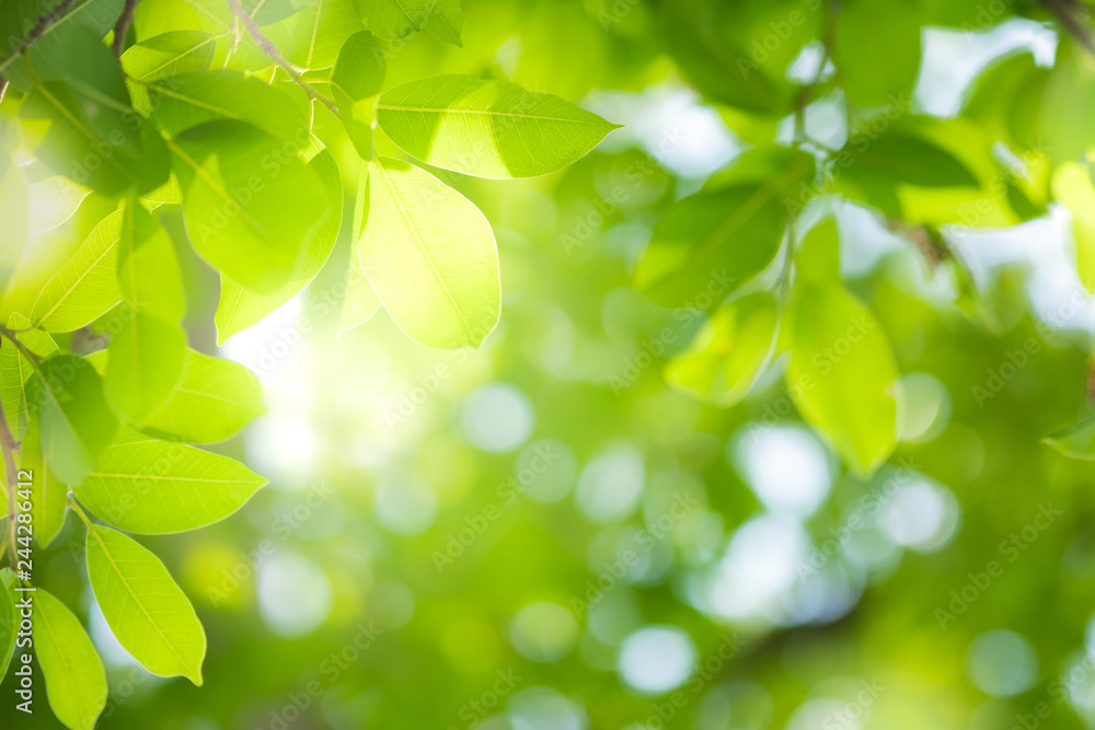 Fototapety, obrazy: Close up beautiful view of nature green leaves on blurred greenery tree background with sunlight in public garden park. It is landscape ecology and copy space for wallpaper and backdrop.