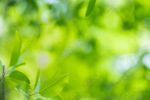 mata magnetyczna Close up beautiful view of nature green leaves on blurred greenery tree background with sunlight in public garden park. It is landscape ecology and copy space for wallpaper and backdrop.