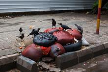 Kolkata / India - August 2015: Crows Eating Trash On A Sidewalk In Kolkata.