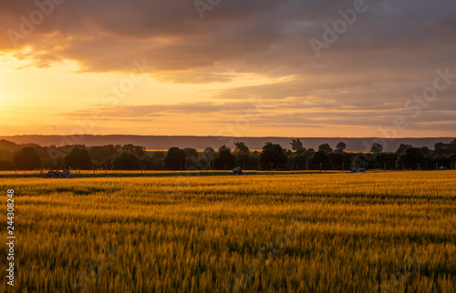 Ingelijste posters Cultuur The sunset over wheat field in Germany