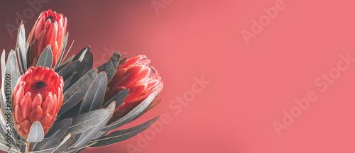 Photo  Protea buds closeup