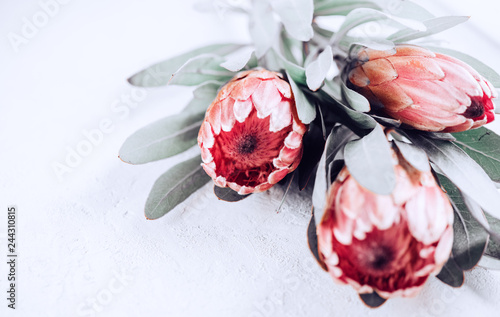 Wall Murals Floral Protea buds closeup. Bunch of pink King Protea flowers over grey background. Valentine's Day bouquet