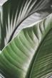 Leinwandbild Motiv tropische pflanze closeup