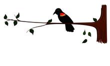 Red Winged Black Bird Sitting ...