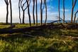 canvas print picture - Küstenwald an der Ostsee bei Nienhagen