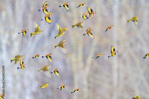 Fototapeta premium pięknie przelatują nad lasem ptaki