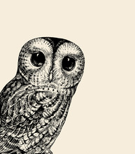 Cute Owl Illustration. Retro Owl Vector Illustration. Baby Owl Black On A White. Can Be Used For T-shirt Print, Kids Wear Fashion Design, Baby Shower Invitation, Nursery Card