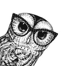 Cute Owl Illustration Wearing ...