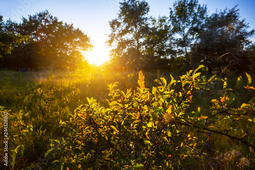 Poster Jardin forest glade at the sunset, quiet evening rural landscape