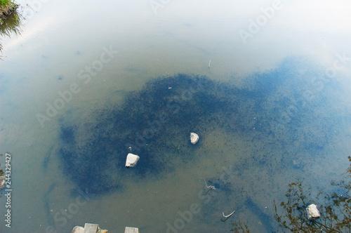 Kaulquappen Tadpole Polliwog Pollywog lake See Teich Pond 2 Slika na platnu