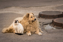 A Cat And A Dog Are Sitting To...