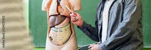 Obraz na plátně Young male hispanic teacher in biology class, holding digital tablet and teaching human body anatomy, using artificial body model to explain internal organs