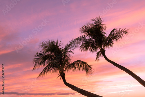 Poster Koraal Palm Trees in a Maui Sunset