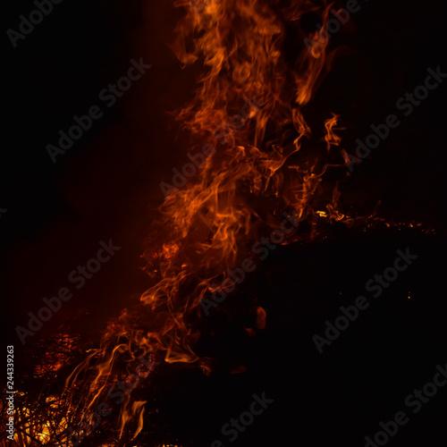 Fotografiet  Burning of rice straw at night.