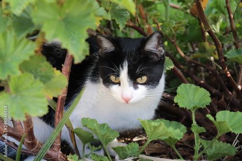 Fotomural Gato entre folhas