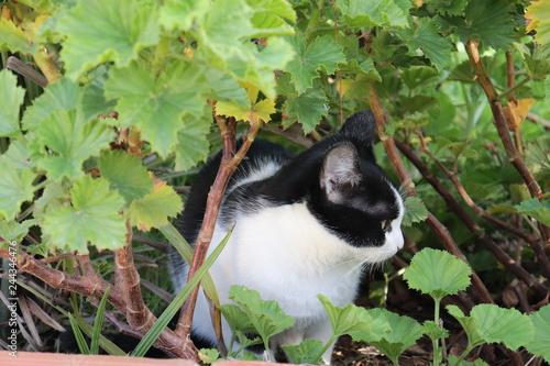 Fotografía  Gato entre folhas