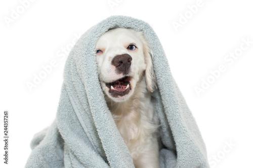 DOG BATHING Canvas Print