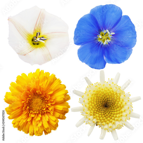 Fotomural Wild chamomile, calendula, flax and field bindweed flowers isolated on white bac