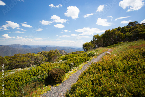 Foto op Plexiglas Oceanië Mount Buller Walking and Biking Trails in Summer