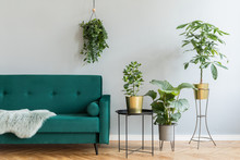 Home Interior With Green Sofa And Potted Plants