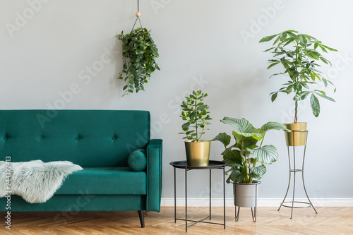 Minimalistic home interior with green velvet design sofa, coffee table and a lot of plants. Copy space for inscription, mock up poster. Brown wooden parquet. Concept of stylish home interior garden.