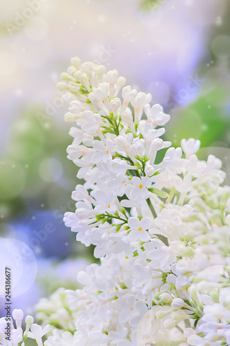 Wall Murals Lily of the valley Blooming lilac flowers. Abstract background. Macro photo.