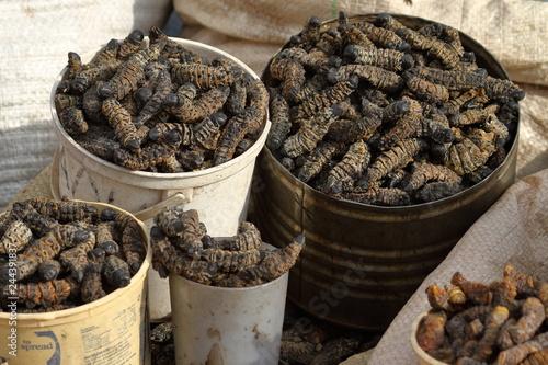 Lebensmittel Mopane Würmer Insekten essen Canvas Print