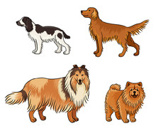 Dogs Of Different Breeds In Color (set4) - Vector Illustration