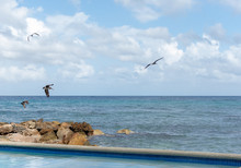 A Group Of Pelican Birds Flyin...
