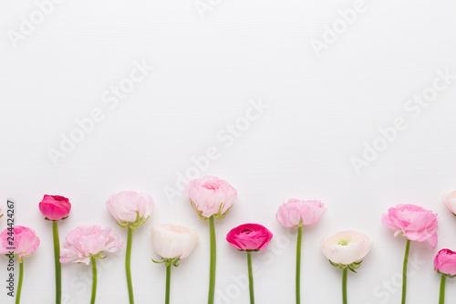 Fotografia Beautiful colored ranunculus flowers on a white background.