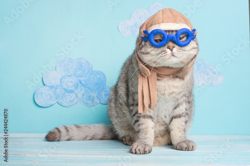 Fotografía  Very funny cat pilot of an airplane with glasses and a pilot's hat, against a background of clouds