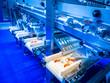 Leinwanddruck Bild - Conveyor. Seafood processing equipment. Shrimp processing line. Seafood. Conveyor line for food production. Food industry.