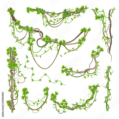 Tela Liana or jungle plant greenery winding branches