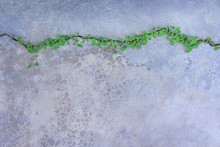 Top View Colorful Green Plants In Lines Patterns Growing  On Concrete Cracks Floor, Nature Background