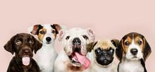Group Portrait Of Adorable Pup...