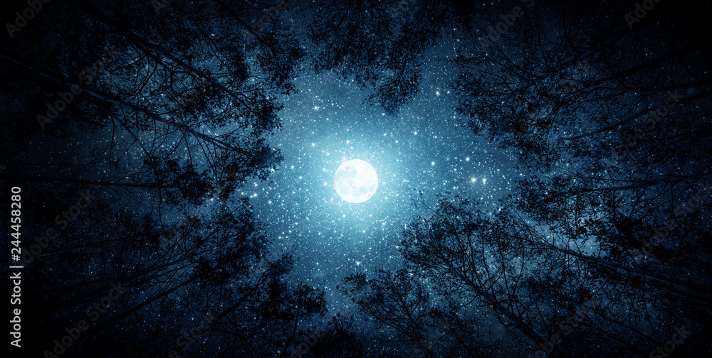Fototapety, obrazy: Beautiful night sky, the Milky Way, moon and the trees. Elements of this image furnished by NASA.