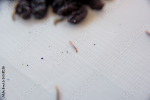 Missing raisins on a white background  Spoiled dried fruits on a