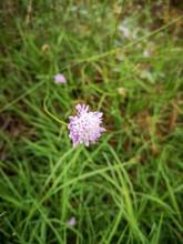 Flowering Plant Flower Freshne...