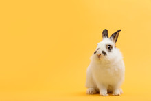 White Rabbit On Yellow Backgro...
