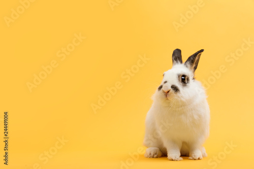White rabbit on yellow background. Fototapet