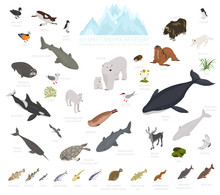 Ice Sheet And Polar Desert Biome. Isometric 3d Style. Terrestrial Ecosystem World Map. Arctic Animals, Birds, Fish And Plants Infographic Design