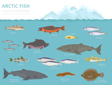 Ice Sheet And Polar Desert Biome. Terrestrial Ecosystem World Map. Arctic Animals, Birds, Fish And Plants Infographic Design