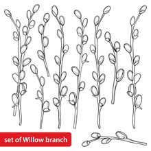 Vector Set With Outline Willow...