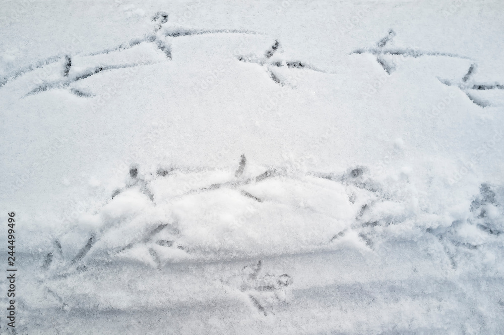 dove left footprints in the snow in the form of a walkway on the stone parapet