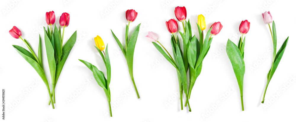 Fototapety, obrazy: tulip flowers set isolated on white with clipping path included