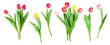 Tulip Flowers Set Isolated On ...