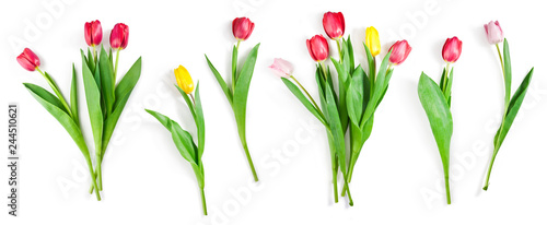 Photo  tulip flowers set isolated on white with clipping path included