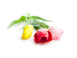 Fototapeta Tulipany - bouquet of three tulip flowers isolated on white background