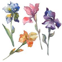 Purple, Red, Orange And Blue Irises Botanical Flower. Watercolor Background Set. Isolated Iris Illustration Element.