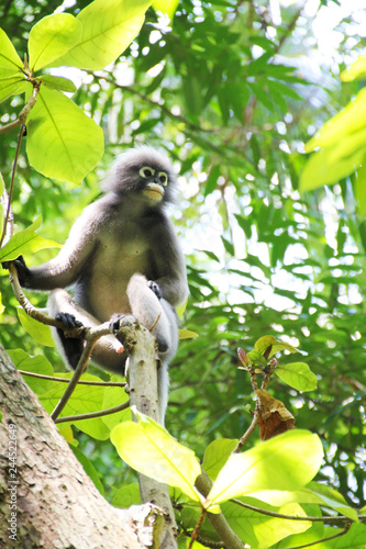 Wild monkey sitting on a tree in Thailand Wallpaper Mural